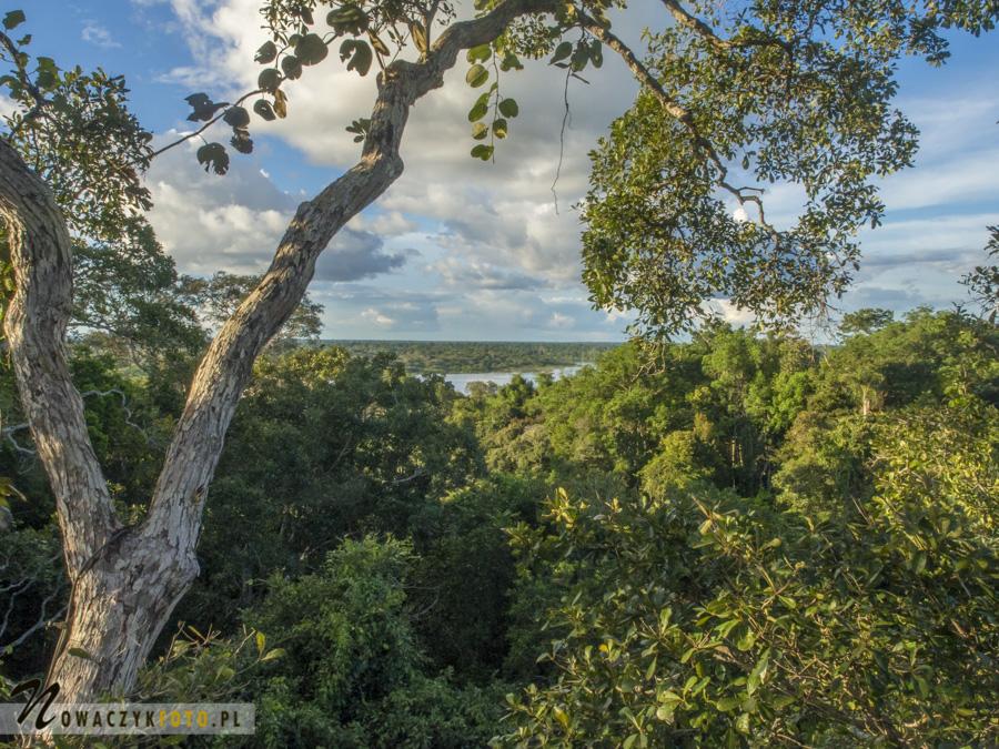 Dżungla Amazońska, widok z góry